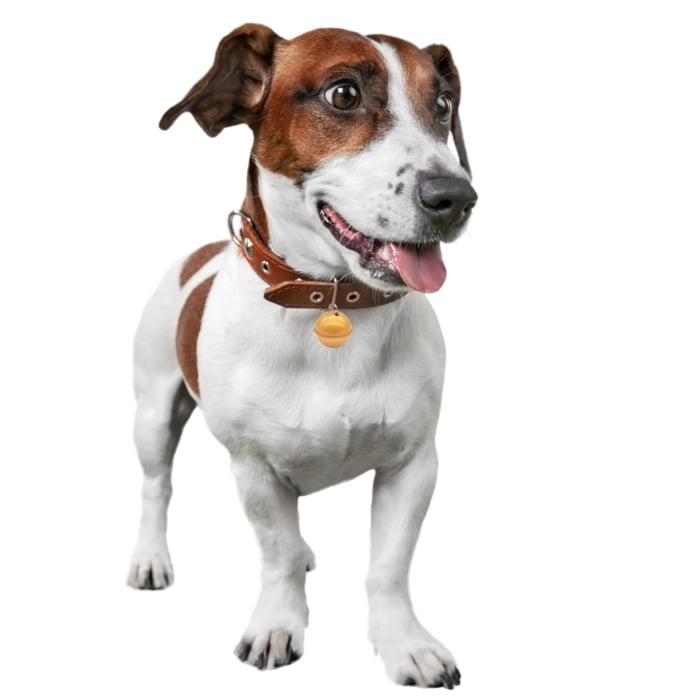 Rastreador GPS para animais G-Pet